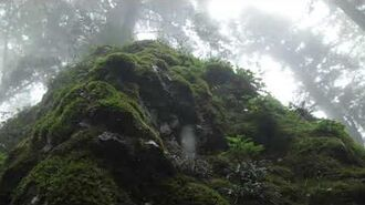 Calming Sound of Rain in Foggy Forest 1 Hour Rain Drops Falling From Trees