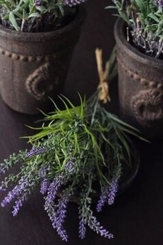 Зимняя аптечка из трав