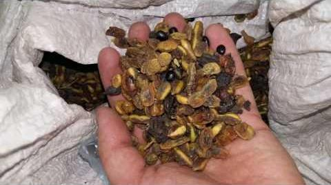 Лекарственные травы Алтая