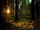 Эсбаты и кельтский древесный календарь