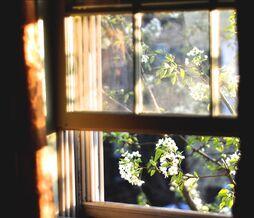 Окно из кухни ведьмы