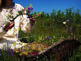 Волшебные травы Руси