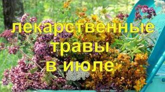 Лекарственные травы в июле. Medicinal herbs