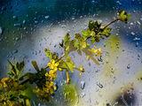Заговор на первый дождь
