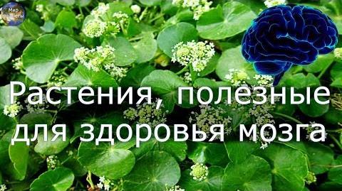 Растения, полезные для здоровья мозга