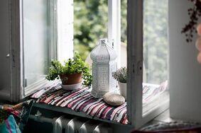 Комнатные растения для защиты дома