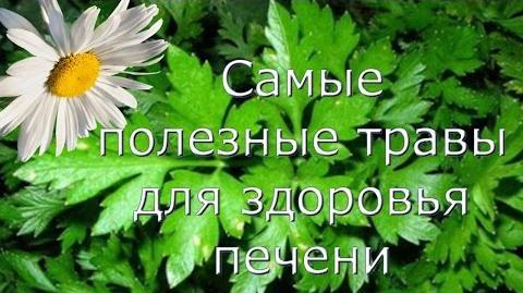 Самые полезные травы для печени