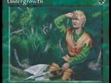 Sottobosco (Undergrowth)