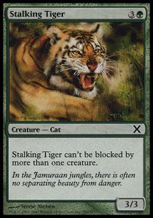 Stalking Tiger10
