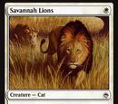 Leoni della Savana (Savannah Lions)