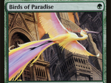 Uccelli del Paradiso (Birds of Paradise)