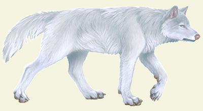 Direwolf-albino
