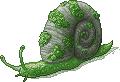 Moss Snail Adult