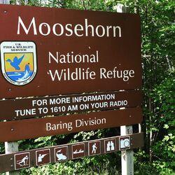 Moosehorn