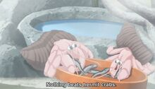 Majikoi-3-hermit-crabs