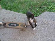 Teeny Tiny!!!