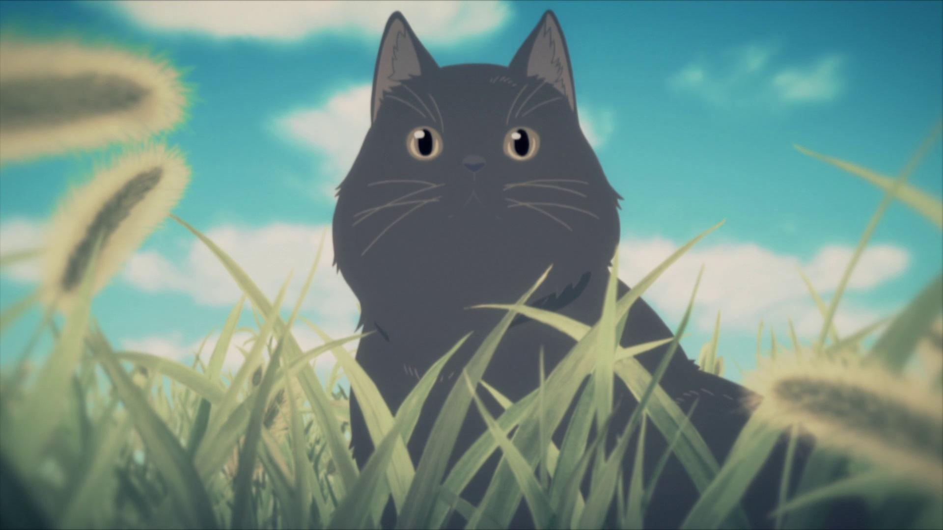 Daru | Makoto Shinkai Wiki | Fandom