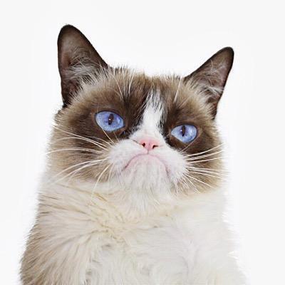 File:Grumpy Cat.jpeg