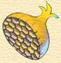 HoneyOnion