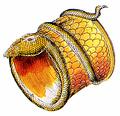 CobraBracelet