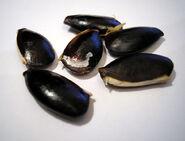 Chikoo seeds