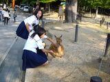 Nara ciervo colegialas