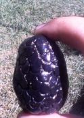 New world salamander egg