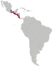 Nlca MAP
