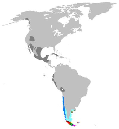 Dornica subdivisiope