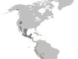 300 a 345 (Guerra Tribal)