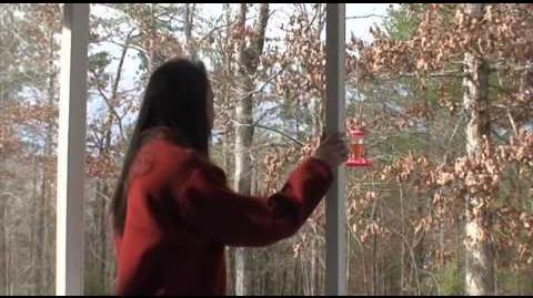 Alex Kralie's Marble Hornets Trailer