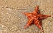 Ocean-sand-sea-star