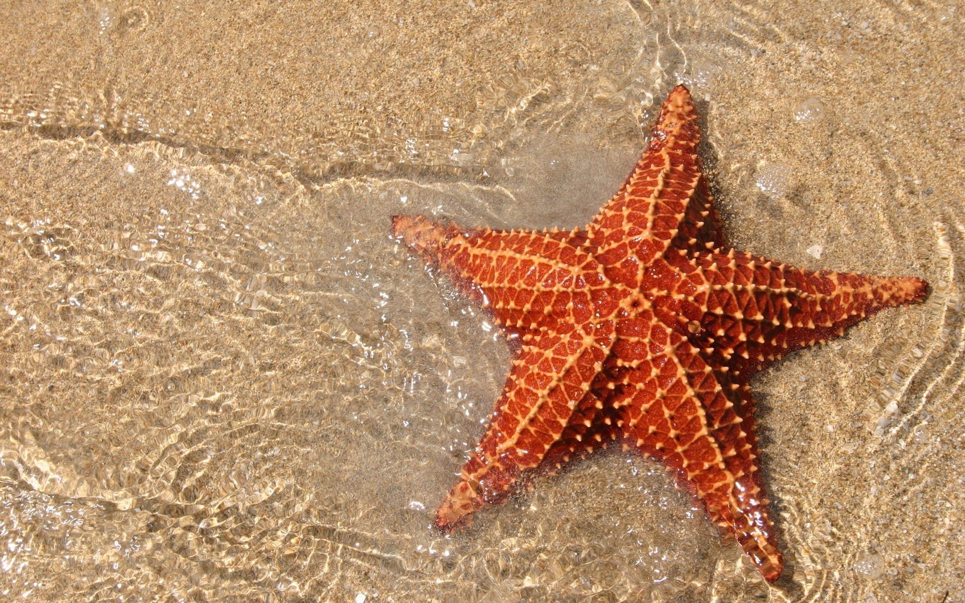 image ocean sand sea star jpg marine wiki fandom powered by wikia