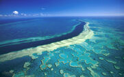 Great-barrier-reef-hardy