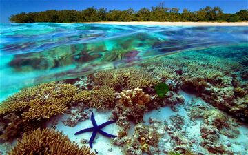 GreatBarrierReef 2434464b