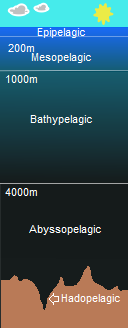 Pelagic Layer Diagram