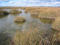 Salt marsh swamp