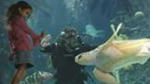 The Newport Aquarium