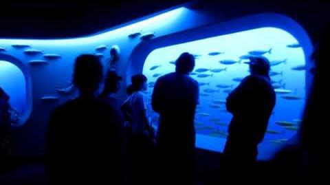 Quick Walkthrough - Monterey Bay Aquarium 2013