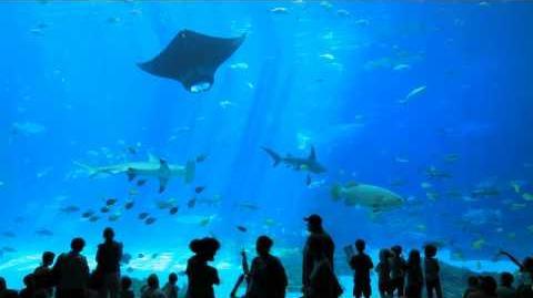 The World's Largest Aquarium Georgia Aquarium Atlanta GA