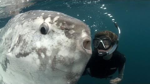 Strange Sunfish and Hope for the Ocean
