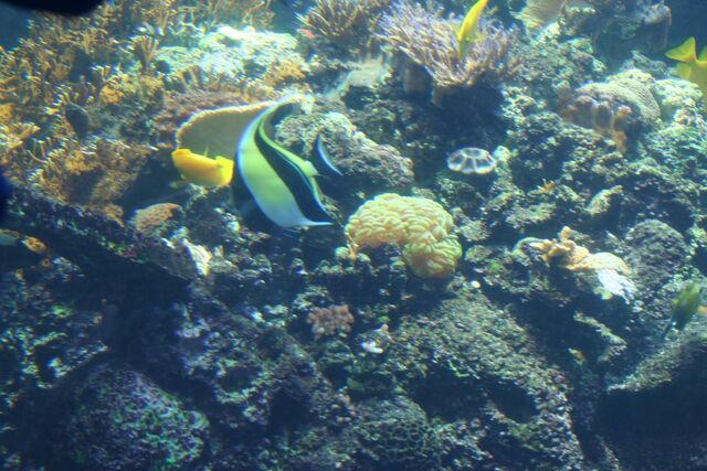 File:GA. Aquarium 176.jpg