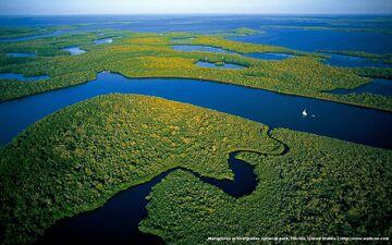 Everglades-national-park39s-mangrove-forests