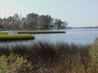 Salt-marsh2