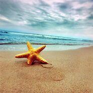 Sandy shores-beach