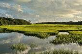 Salt marsh florida