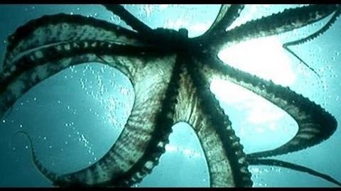World's Most Intelligent Animal - Mimic Octopus