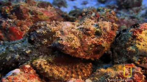 Exploring Oceans Great Barrier Reef