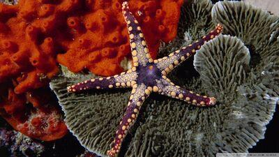 Starfish-wallpaper-960x540