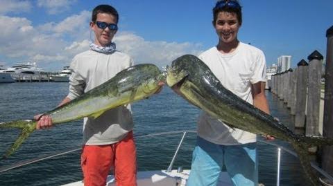 Mahi Mahi - Dolphin Fishing - Miami, Fl.